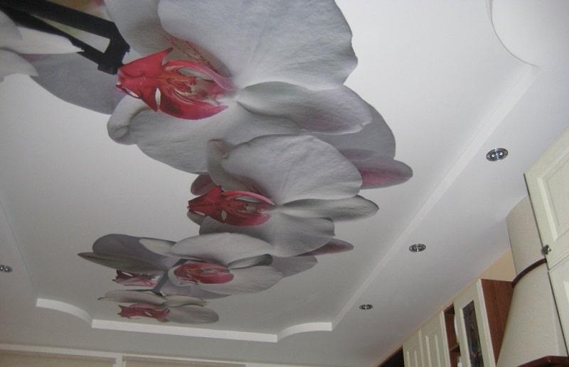 Натяжные потолки с фотопечатью и арт потолки №9